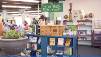 'Seed Library' in Ocean Beach Gives Community Free Seeds