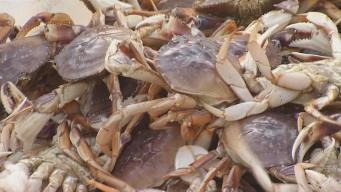 More California Coast Reopens to Dungeness Crab Fishing