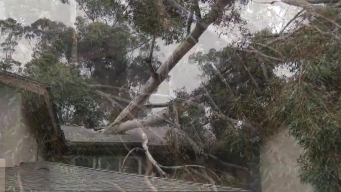 50-Foot Tree Falls On Home With Children Inside