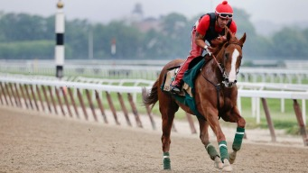 California Chrome Favored to Win Belmont