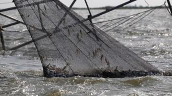 Fishermen Still Struggling 5 Years After BP Gulf Spill