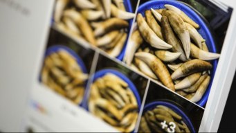 Facebook Puts Ads on Pages Illegally Selling Animal Parts