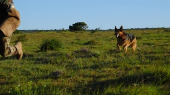 Horses and Dogs Are Used in War Against Poaching