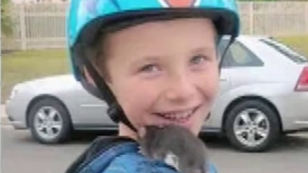 San Diego Family Sues Petco When Rat Bite Fever Kills Son