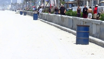 $70,000 Pledged to Fight Mission Beach Flies
