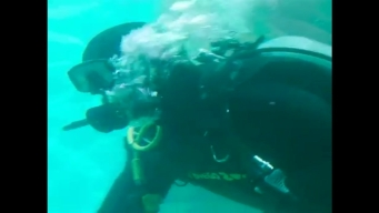Watch: San Diego Zoo's New Dive Team