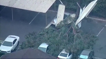 Tree Falls on Carport, Crushes Cars