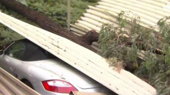 Cars Crushed When Tree Topples on Spring Valley Carport