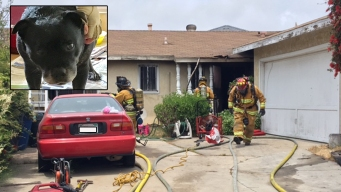 Chula Vista Firefighters Rescue Dog in House Fire