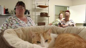 Community Helps 260 Cats Evacuated in Jennings Fire