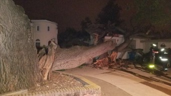 Residents OK After Large Tree Limb Falls on Cupertino House