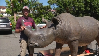 Riding for Rhinos, A Cyclists Pulls Giant Replica Rhino 2,000 Miles