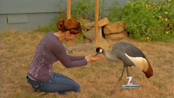 Exotic Birds Find Home at Local Organization