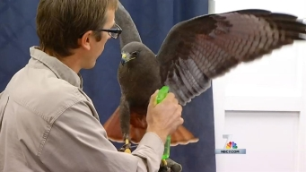 Raptor Institute Teaches La Mesa Preschoolers