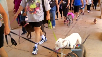 Pit Bull Walk Aims to Educate Skeptics About the Breed