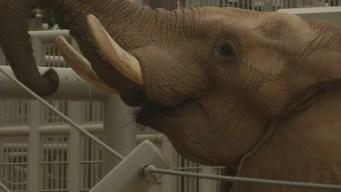 Dagmar Midcap Meets a Bull Elephant