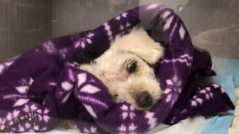 Dog Found Badly Abused in Long Beach, Reward Offered