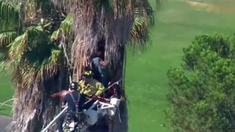 Firefighters Rescue Tree Trimmer
