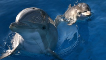 Climate Change Delays Move of National Aquarium Dolphins