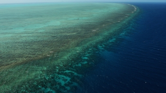 Scope of Barrier Reef's Coral Bleaching Alarms Scientists