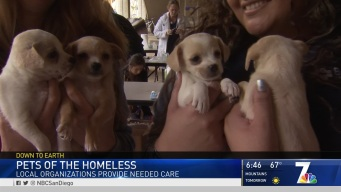 Organizations Step Up to Help Homeless Pet Owners