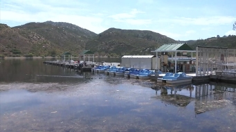 Too Hot for Some Fish to Survive in Lake Poway