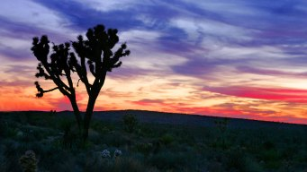 Joshua Tree Celebrates With Free Entrance