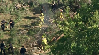 Drought Leaves Residents Worrying Over Safety of Trees