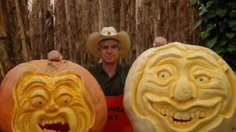Picasso of Pumpkin Carving Shows Off Spooktacular Gourds