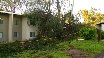 Tree Falls on Encinitas Apartment Complex