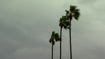Trees Topple in San Diego Amid Wind Warning