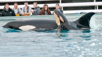 SD Explained: SeaWorld Economic Impact