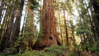 Trail to Giant Sequoias Closes