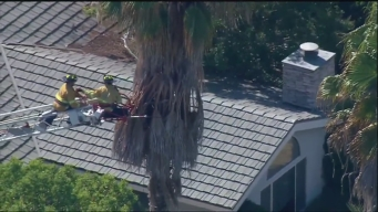 Firefighters Rescue Trimmer Stuck in Palm Tree