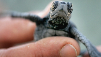 Canadian Man Fined for Smuggling Turtles in His Pants