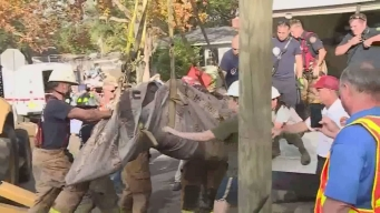 Video Shows Moment Manatee Rescued From Storm Drain