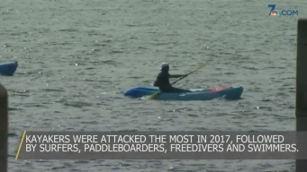 Experts Weigh in on Shark Attacks Along the Coast