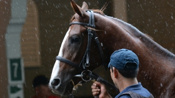 Yea or Neigh? Guess the Real Racehorse Name