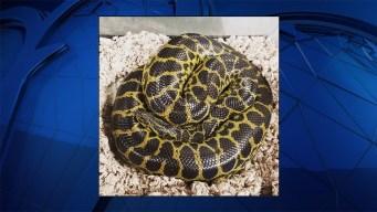Virginia Woman Finds Anaconda in Apartment Toilet