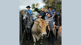 Officer Rides Wayward Bull Back to Calif. Birthday Party
