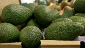 Will the US Run Out of Avocados If the Border Closes?
