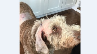 Man and Dog Attacked While on Walk