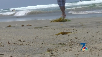 Why Are Hundreds of Baby Clams Washing Ashore?