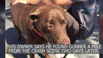 Dog Thrown From Truck During Crash Found Safe