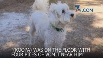 Local Woman Shocked to Find Puppy with Chemical Burns from Backyard Plant
