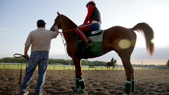 A Bettor's Guide to the Belmont Stakes