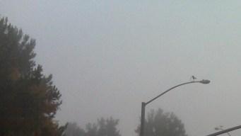 It's a Foggy Friday, San Diego!