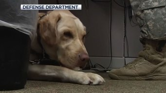 Salute: Gunther and His Handler