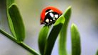 Stepping Out: Ladybug Day