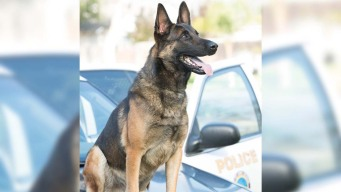 Long Beach Police Continue to Investigate Heat-Related K-9 Death